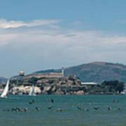 Alcatraz With Pelicans Art Print