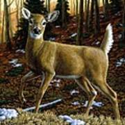 Whitetail Deer - Alerted Print by Crista Forest