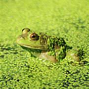 Algae Covered Frog Art Print