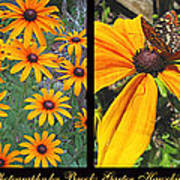 All About Black-eyed Susans Art Print