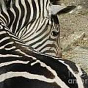 All Stripes Zebra 2 Art Print