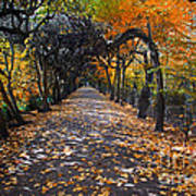 Alley With Falling Leaves In Fall Park Art Print