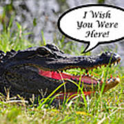 Alligator Greeting Card Art Print by Al Powell Photography USA