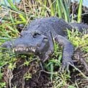 Alligator Overbite Art Print