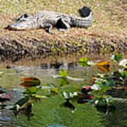 Alligator Sunbathing Art Print
