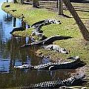 Alligators Beach Art Print