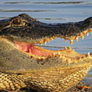 Alligator's  Mouth Art Print