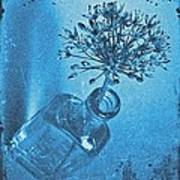 Allium Cyanotype Art Print