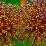 Allium Seeds Art Print