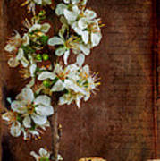 Almond Blossom Art Print by Marco Oliveira