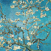 Almond Branches In Bloom Art Print