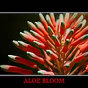 Aloe Bloom Window Art Print