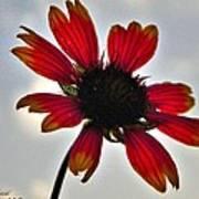 Alone Flower I Mlo Art Print