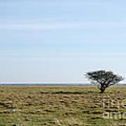 Alone Tree At A Coastal Grassland Art Print