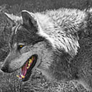 Alpha Male Wolf - You Look Tasty 2 Art Print