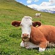 Alpine Pasture With Cow Art Print