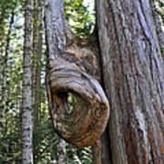 Altered Tree Trunk Growth Art Print