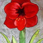 Amaryllis 2 Art Print