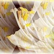 Amaryllis-6 Art Print