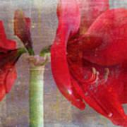 Amaryllis In The Rough Art Print