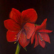 Amaryllis On Black Art Print