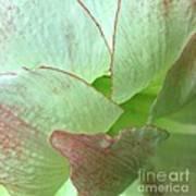 Amaryllis Petals Art Print