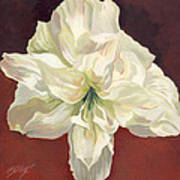 Amaryllis With Red Art Print