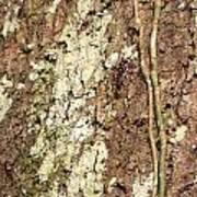 Amazon Ant Art Print