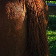 Amber Horse Tail Art Print