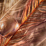 Amber Art Print