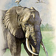 Amboseli Morning   Art Print