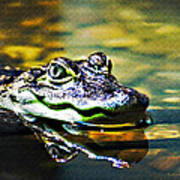 American Alligator 1 Art Print