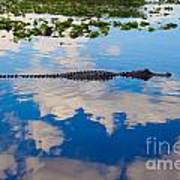American Alligator Swimming Through The Clouds Art Print