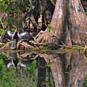 American Anhinga Or Snake-bird Art Print by Christine Till