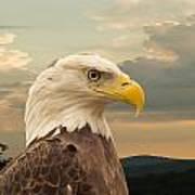American Bald Eagle With Peircing Eyes Art Print by Douglas Barnett