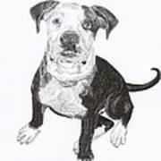American Bull Dog As A Pup Print by Jack Pumphrey