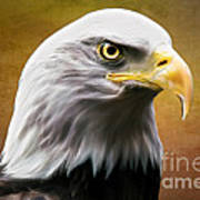 American Eagle Art Print by Shannon Rogers