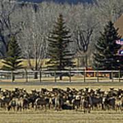 American Elk   #4305 Art Print