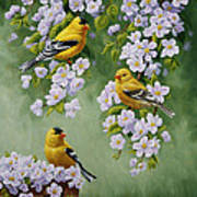 American Goldfinch Spring Print by Crista Forest