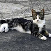 American Grey Tiger Stripe Kitten Portrait Art Print