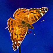American Lady Butterfly Blue Square Art Print