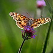American Lady Butterfly In Garden Art Print