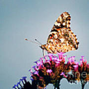 American Painted Lady Butterfly Blue Background Art Print