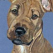 American Pit Bull Terrier Puppy Art Print