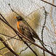 American Robin On A Branch Art Print