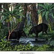 American Tapir Art Print