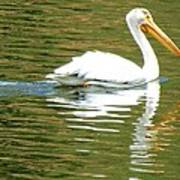 American White Pelican On A Lake Art Print