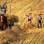 Amish Boys Wheat Harvest  Art Print