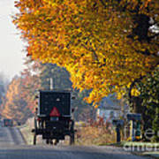 Amish Buggy Fall 2014 Art Print