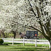 Amish Buggy Fowering Tree Art Print